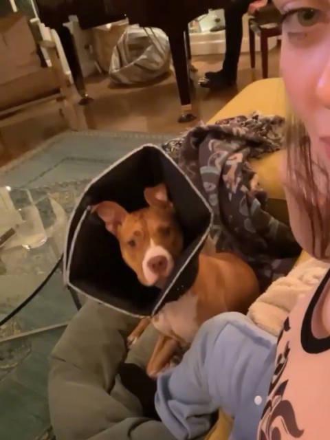 碧梨Billie Eilish逗狗,狗子一脸懵逼