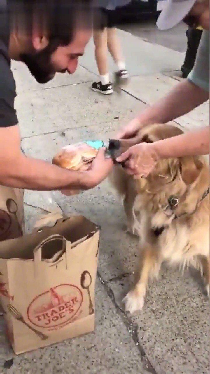 外国一网友刚买了面包,被路过的金毛发现了,汪星人表示面包很香