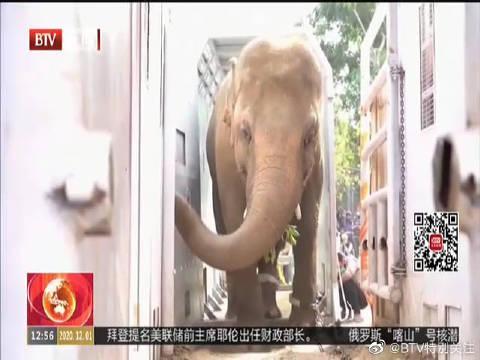 """巴基斯坦""""最孤独的大象""""抵达柬埔寨开启全新生活"""