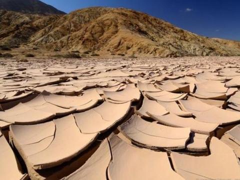 世界最干旱的沙漠,下3场雨后开出了花朵,科学家为什么而忧心?