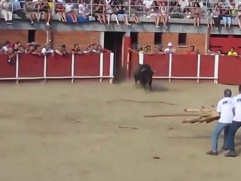 公牛不愿被斗牛士戏耍,一头撞墙了结生命:我牛族永不为奴!