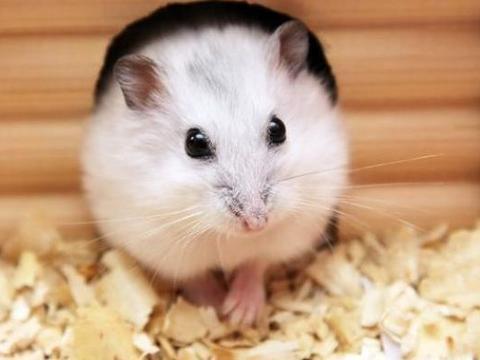 生肖鼠:后半生谁是你的贵人,谁又是你的小人,属鼠的看看吧!