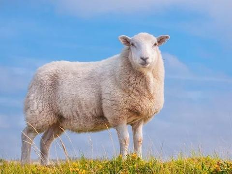 生肖羊:你要大喜临头,12月2号躲不过的喜,看看是什么喜?