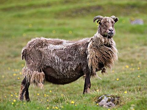 109岁算命大师:生肖羊人12月第1天要大难临头,能躲过就是福!