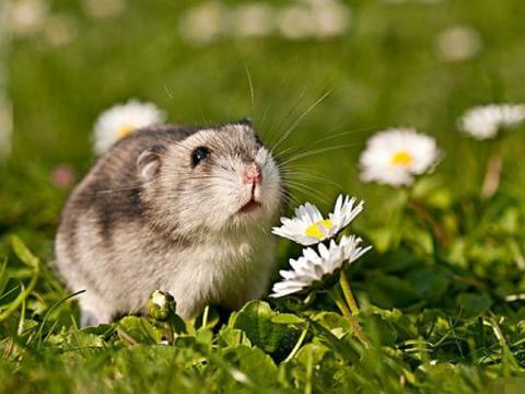属相属鼠12月,生肖鼠有3大喜来临,属鼠人看看什么喜?