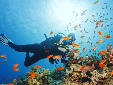 薄荷新闻:菲律宾被评为全球最佳潜水胜地