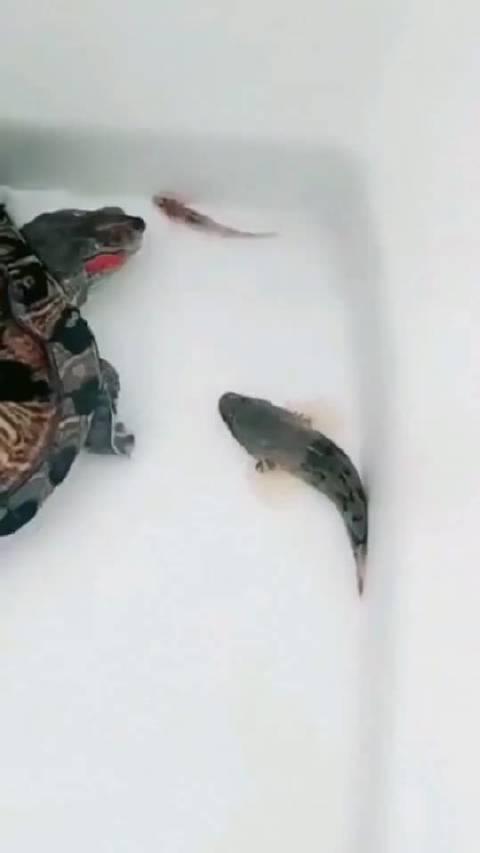 乌龟的心得,抓小放大,可谓是悟透了呀!978