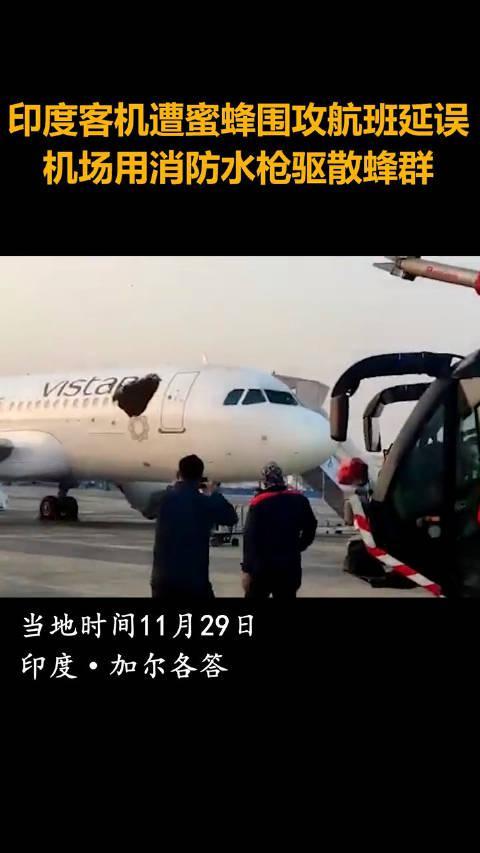 印度客机遭蜜蜂围攻致航班延误,机场用消防水枪驱散蜂群