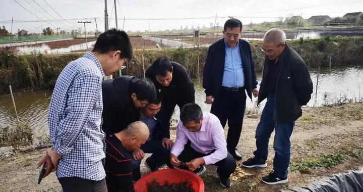 江苏省河蟹体系岗位专家赴启东推广示范基地调研指导
