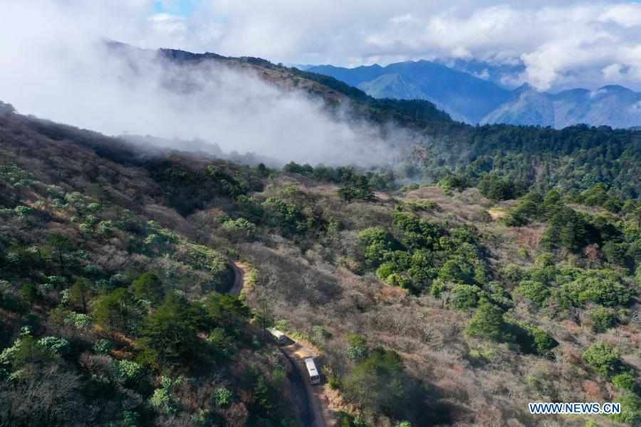 Aerial photo taken on Dec. 1, 2020 shows vehicles running in forests at Wuyishan National Park, southeast China's Fujian Province. Wuyishan National Park is one of the country's 10 pilot national parks, with 210.7 square kilometers primary forest vegetation preserved here. (Xinhua/Jiang Kehong)