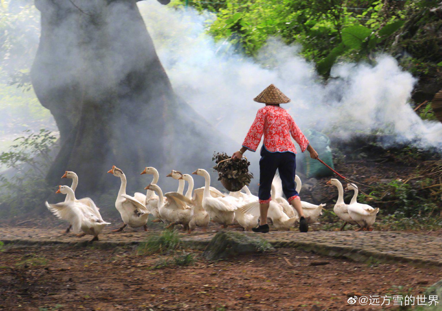 福建霞浦杨家溪,八百年古榕树下,烟火师卖力地点起烟饼…………