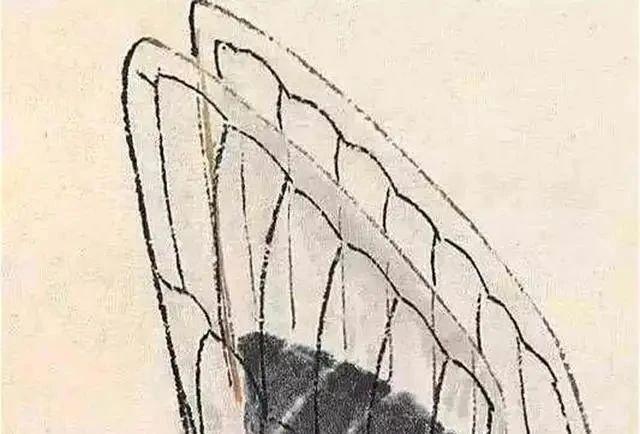 齐白石画的蝉,让张大千很佩服,放大5倍依然清晰可看