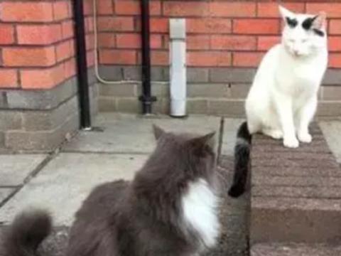 白猫与黑猫院子内偶遇,主人担心它们打架,没想到它们却私下定情