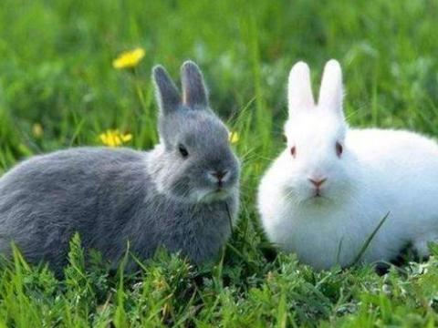 属兔人2021年,生肖兔有3大喜来临,属兔人最好仔细看看!