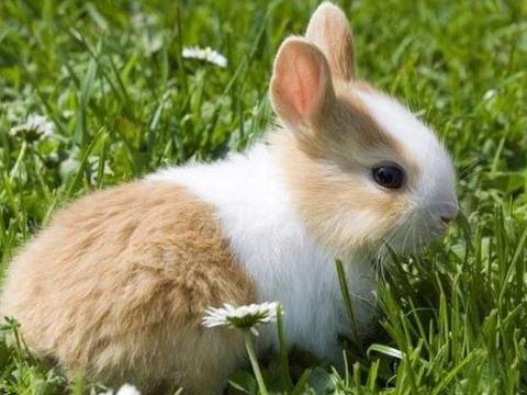 属兔人2021年,生肖兔有3大喜来临,速度看看什么喜?