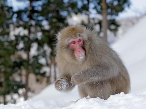 生肖猴:一定要重视2个人,一个让你事业有成,一个陪你白头到老