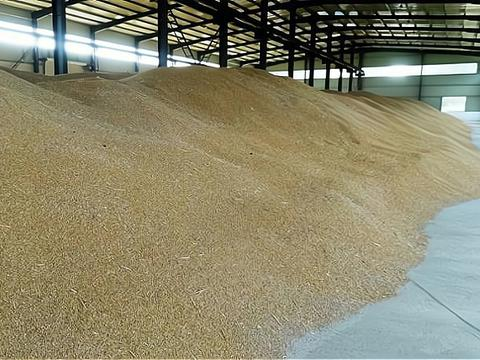 今日小麦价格最新行情 预测2021年的走势会怎样?