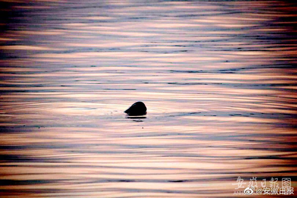 元旦施行!安徽出台全国首部江豚保护条例:栖息地严禁开发建设