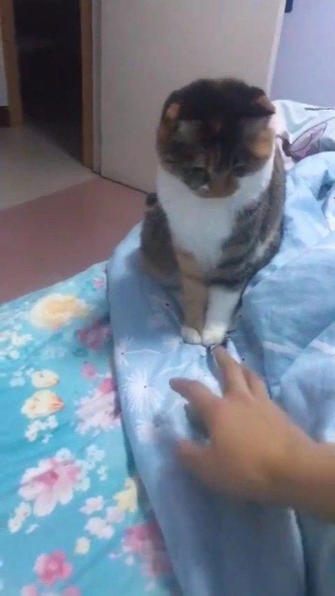 猫:愚蠢的人类,你对我的速度一无所知