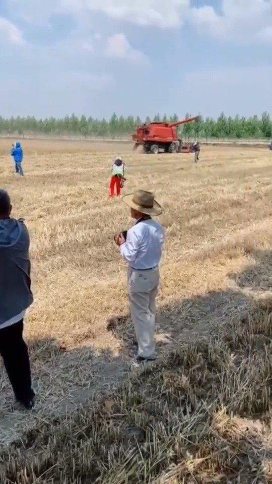 农民收麦,大爷摄影,都是一群有退休金的快乐小老头
