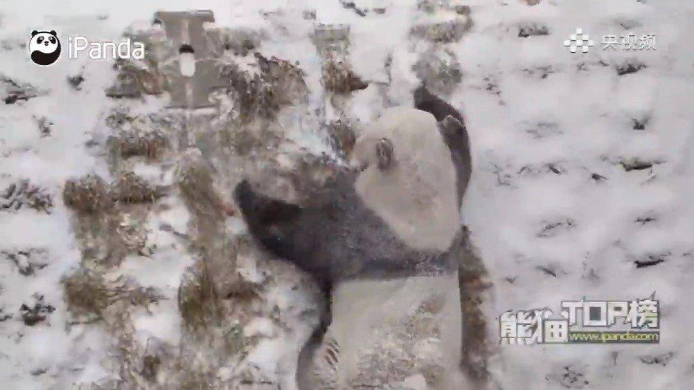 """原来北方的雪人这么忙""""北方熊""""表示有话说!"""