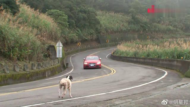 富豪路边赛车,周边的流浪狗跑过来围观看戏