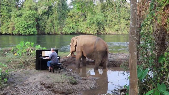 太优秀了,饲养员给大象弹钢琴,大象听的如痴如醉