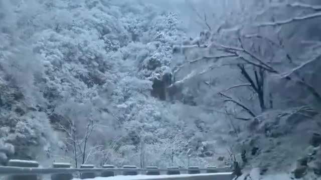 秦岭深处,白雪皑皑,美翻了!太冷艳!