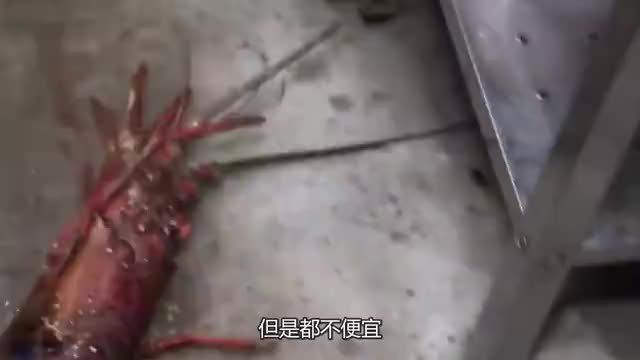 """""""伊势龙虾""""为何是日本海军特供美食?"""