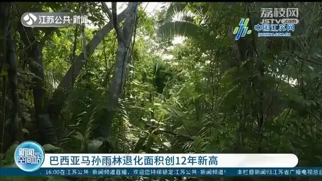 巴西亚马孙雨林退化面积创12年新高