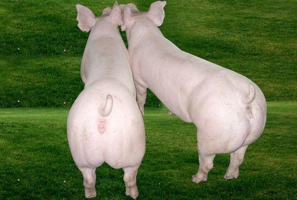 属猪人2020年12月运势,穿什么颜色衣服最旺!12月3日开始转变