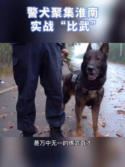 2020年安徽省警犬技术实战技能比武搜捕赛在淮南举行!