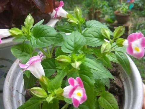 还在用净化器除尘?不如盆栽3种植物,轻松营造健康的居家环境