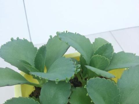 六种高颜值不难养的热带绿植,叶子翠绿净化空气,冬天也好活