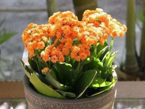 3种花卉适合天冷栽种,养上2盆,既能观叶赏花又能净化空气