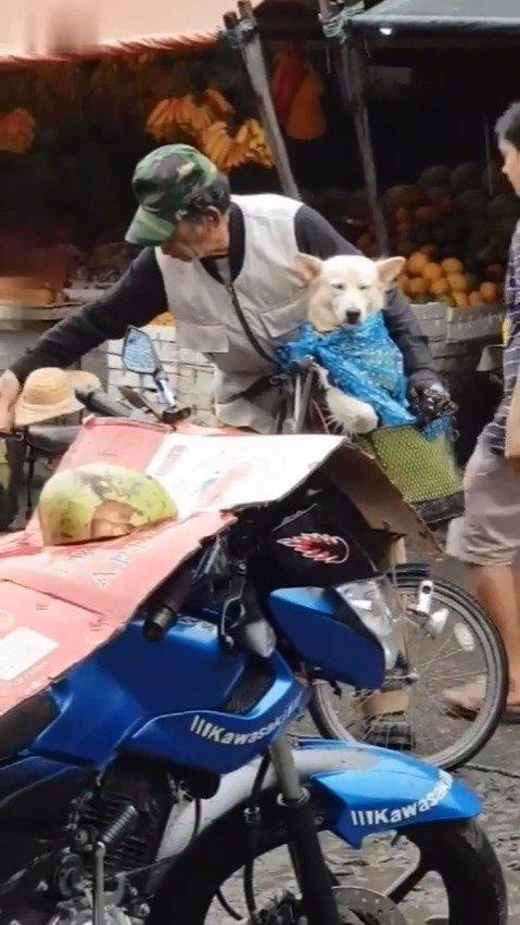 街上一老爷爷不让小狗淋到雨,为它戴上了可爱的小草帽