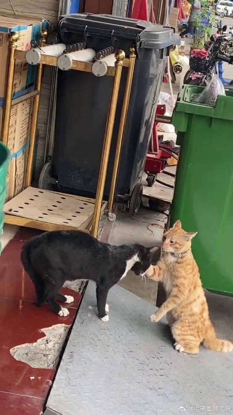 橘猫和黑猫打架,场面异常激烈,看起来好吓人