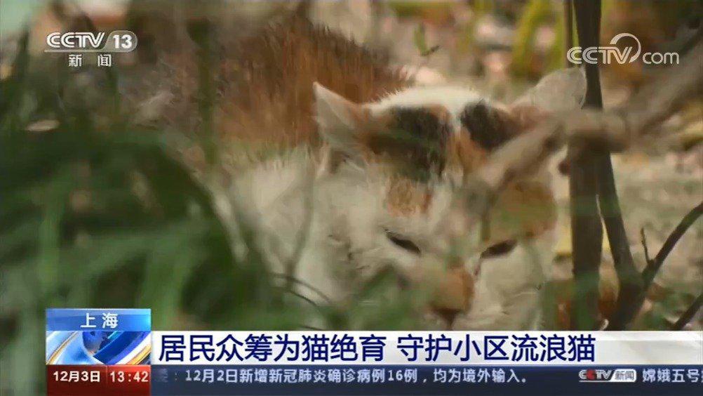 小区居民众筹为流浪猫绝育