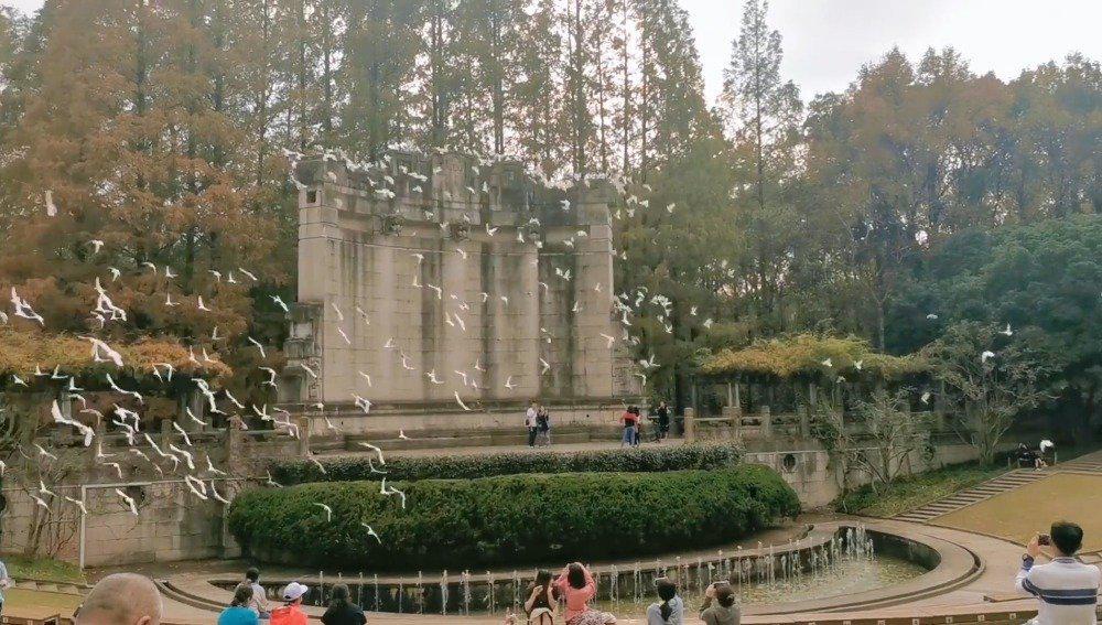 如果你来南京,我带你去中山陵喂喂鸽子,去南京路望望梧桐树