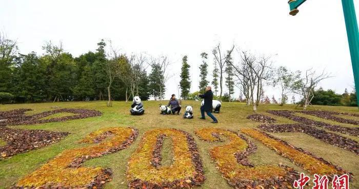 """成都环卫工人用落叶在公园摆出""""大运会""""主题画作"""