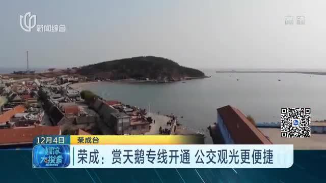 荣成:赏天鹅专线开通  公交观光更便捷