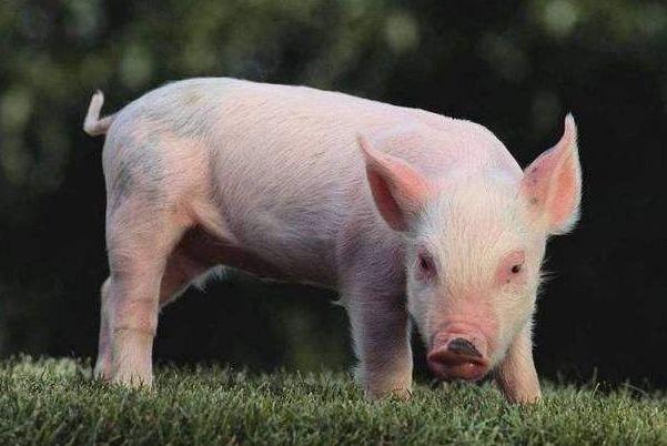 属猪人2020年12月运势,穿3种颜色衣服最旺!12月4日开始转变