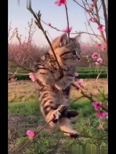 空中的小猫咪好可爱! 这大概是传说中的一只狸花压海棠吧