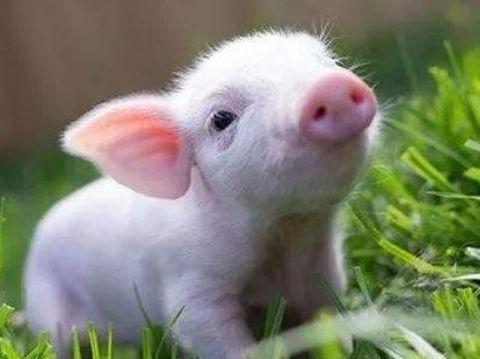 算命大师说:12月属猪人要留心,穿3种颜色衣服可改变运势