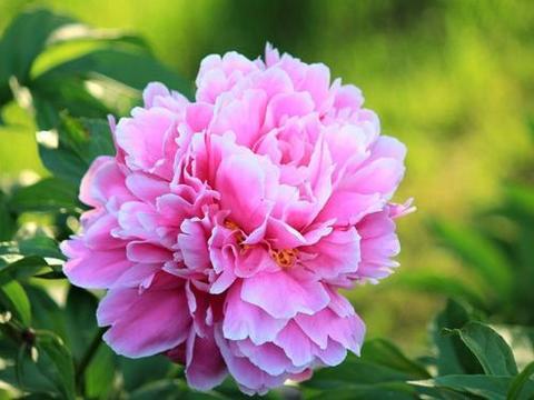 5种耐寒花,现在养一盆,过冬无压力,开花美极了!