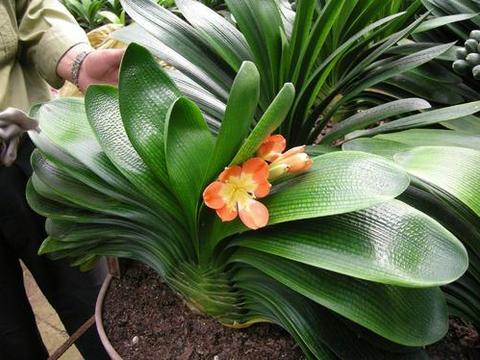4种漂亮花,12月该进屋了,注意保暖顺利过冬,不掉叶美美哒!
