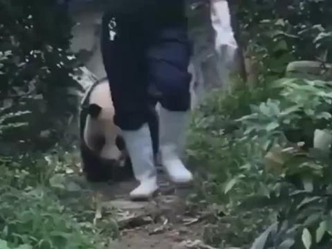 熊猫:敢用笼子扣我,你知道我是谁吗?我是国宝啊!