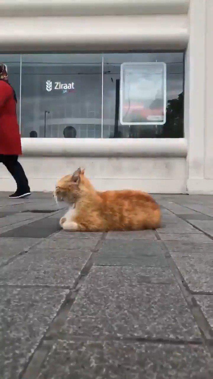 安逸的猫,忙碌的人,猫安逸是因为没人会上去踢一脚踏一脚