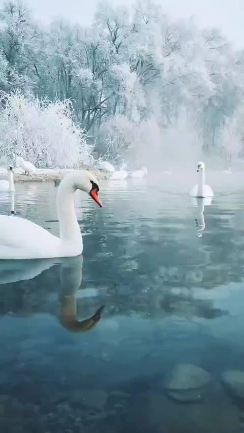 新疆伊犁天鹅湖,冬季绝美,宛如童话仙境!🦢