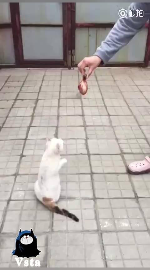 什么也阻挡不了小猫咪对美食的向往!